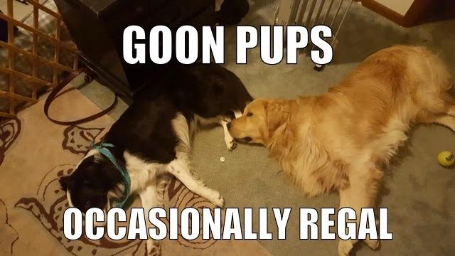 Goonpups